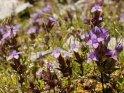 Dieses Motiv finden Sie seit dem 27. September 2011 in der Kategorie Blumen im Berner Oberland.