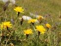Dieses Kartenmotiv wurde am 30. Juli 2012 neu in die Kategorie Blumen im Berner Oberland aufgenommen.