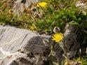 Dieses Motiv finden Sie seit dem 26. Februar 2012 in der Kategorie Blumen im Berner Oberland.