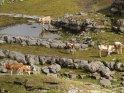 Dieses Motiv findet sich seit dem 28. September 2011 in der Kategorie Tiere im Berner Oberland.