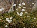 Dieses Motiv findet sich seit dem 14. Februar 2012 in der Kategorie Blumen im Berner Oberland.
