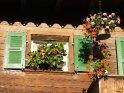 Aus der Kategorie Blumen im Berner Oberland