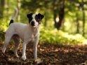 Dieses Motiv finden Sie seit dem 30. September 2011 in der Kategorie Hunde.