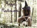 Happy Halloween!    Dieses Motiv finden Sie seit dem 29. Oktober 2011 in der Kategorie Sexy Halloweenkarten.