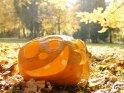 Dieses Motiv finden Sie seit dem 28. Oktober 2011 in der Kategorie Halloweenfotos.