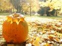 Dieses Kartenmotiv wurde am 28. Oktober 2011 neu in die Kategorie Halloweenfotos aufgenommen.