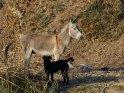 Foto von einem Esel und einem hund
