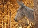 Kopf eines Esels im Profil, kurz vor Sonnenuntergang