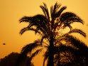 Sonnenaufgang mit Palme und Vogel