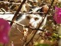 Katze versteckt sich in einem blühenden Busch
