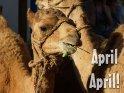 April April!    Dieses Motiv findet sich seit dem 31. März 2012 in der Kategorie Erster April.