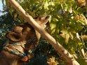Kamel versucht die Blätter eines Baumes zu essen