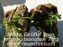 Viele Grüße zum  Internationalen Tag  der Freundschaft    Dieses Motiv befindet sich seit dem 30. Juli 2012 in der Kategorie Internationaler Tag der Freundschaft (30.7.).