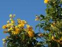 Aus der Kategorie Blumen und Blüten in Ägypten