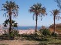 Palmen mit dem Nassersee im Hintergrund