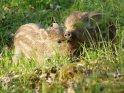 Dieses Kartenmotiv wurde am 27. Juli 2012 neu in die Kategorie Wildschweine aufgenommen.