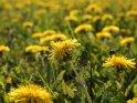 Dieses Motiv befindet sich seit dem 29. April 2012 in der Kategorie Frühlingsblumen.