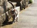 Dieses Motiv findet sich seit dem 25. Mai 2012 in der Kategorie Katzen.