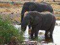 Zwei Elefanten im Wasser