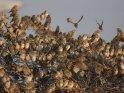 Mit Vögeln überfüllter Strauch