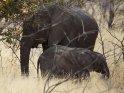 Elefantenkind mit Mutter