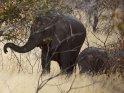 Elefantenkuh mit Kind