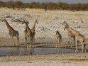 Sieben Giraffen am Wasserloch