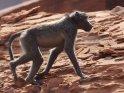 Dieses Motiv findet sich seit dem 24. September 2012 in der Kategorie Twyfelfontein in Namibia.
