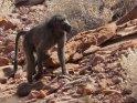 Dieses Motiv wurde am 31. August 2012 in die Kategorie Twyfelfontein in Namibia eingefügt.