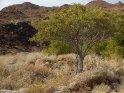 Dieses Kartenmotiv wurde am 23. November 2013 neu in die Kategorie Das Brandbergmassiv in Namibia aufgenommen.