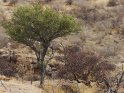 Aus der Kategorie Erongogebirge in Namibia