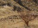 Dieses Motiv findet sich seit dem 24. September 2012 in der Kategorie Wüste Namib in Namibia.