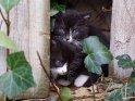 Dieses Motiv finden Sie seit dem 30. April 2015 in der Kategorie Katzen.