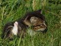 Dieses Motiv befindet sich seit dem 30. August 2013 in der Kategorie Katzen.