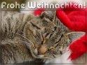 Frohe Weihnachten!    Dieses Motiv befindet sich seit dem 15. Dezember 2012 in der Kategorie Weihnachtskarten.