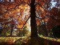 Dieses Motiv findet sich seit dem 22. November 2012 in der Kategorie Herbstlandschaften.