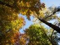 Dieses Motiv finden Sie seit dem 22. November 2012 in der Kategorie Herbstfotos.