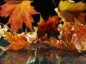 Dieses Motiv finden Sie seit dem 26. Oktober 2012 in der Kategorie Herbstfotos.