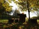 Dieses Motiv wurde am 27. Oktober 2012 in die Kategorie Herbstfotos eingefügt.