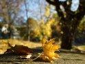 Dieses Kartenmotiv wurde am 29. Oktober 2012 neu in die Kategorie Herbstfotos aufgenommen.