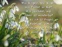 Was klingelt, was klaget, was flötet so klar?  Was jauchzet, was jubelt so wunderbar?  Und als ich so fragte, die Nachtigall schlug:  Der Frühling, der Frühling! — da wusst´ ich genug!    Heinrich Seidel (1842-1906)