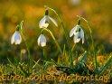 Einen tollen Nachmittag!    Dieses Motiv findet sich seit dem 18. Januar 2012 in der Kategorie Schönen Nachmittag.
