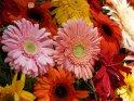 Dieses Motiv finden Sie seit dem 30. September 2015 in der Kategorie Blumen und Blüten auf Madeira.