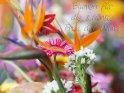 Blumen für die schönste Frau der Welt!    Dieses Motiv finden Sie seit dem 30. Mai 2013 in der Kategorie Komplimente.