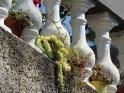 Dieses Motiv ist am 27.08.2016 neu in die Kategorie Sonstige Fotos von Madeira aufgenommen worden.