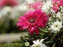 Aus der Kategorie Blumen und Blüten auf Madeira