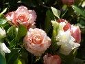 Dieses Motiv findet sich seit dem 25. Februar 2015 in der Kategorie Blumen und Blüten auf Madeira.