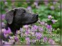 Alles Liebe und Gute zu einem wunderschönen Geburtstag!    Aus der Kategorie Geburtstagskarten für Hundefans