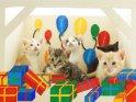 Fünf junge Katzen sitzen in einer Szene mit Luftballons und Geschenken.