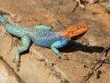 Aus der Kategorie Tiere in Tansania